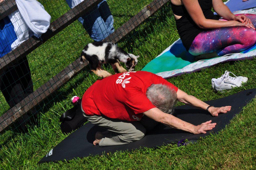 senior living community participating in goat yoga