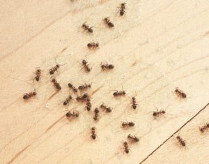 close up of ants crawling on a floor